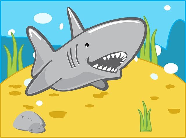 The shark swims ,Photo credit Merio