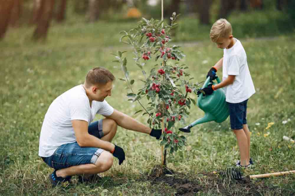 Father with little son are planting tree yard