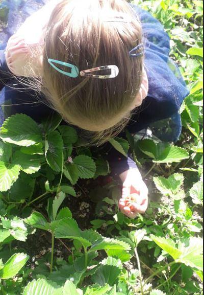 Katarina's first strawberries